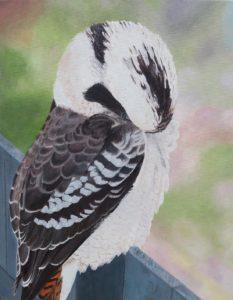 Shame Kookaburra